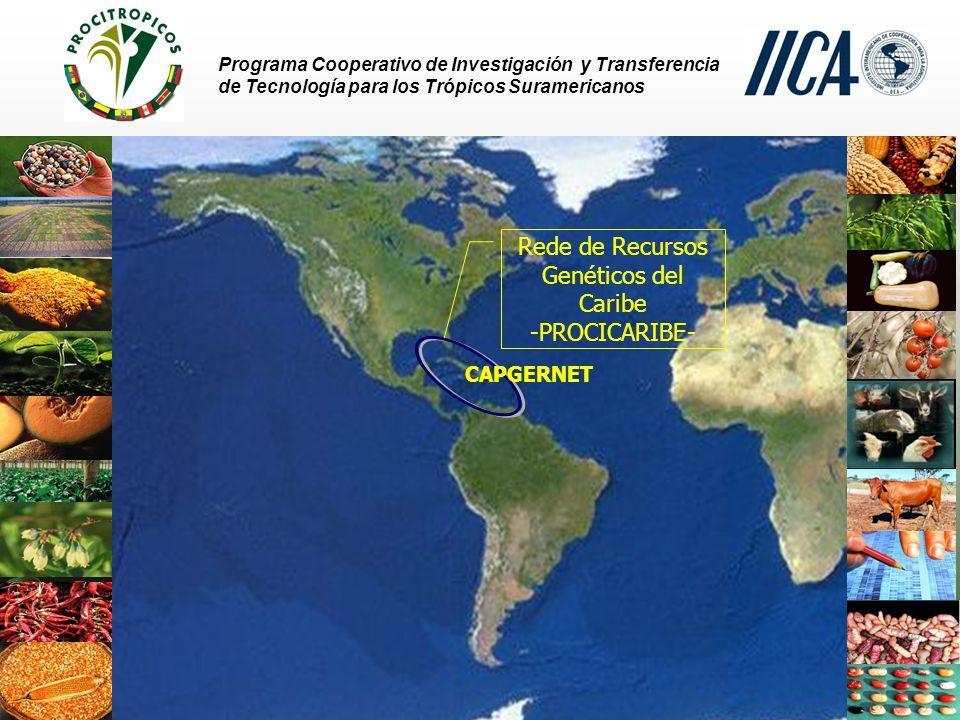 Rede de Recursos Genéticos del Caribe -PROCICARIBE-