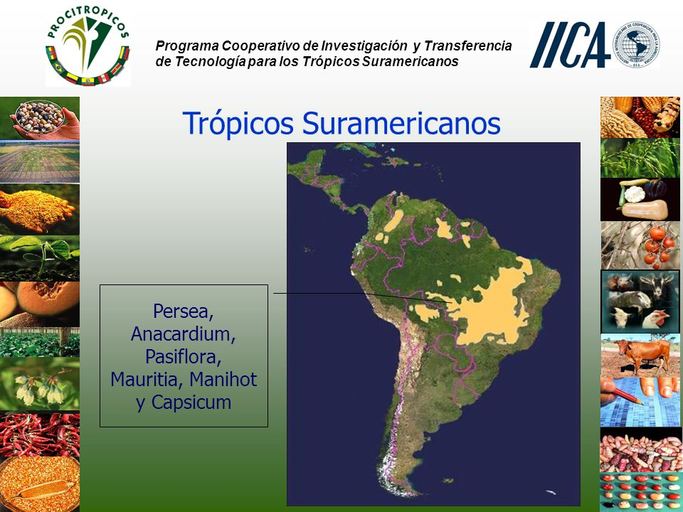 Trópicos Suramericanos