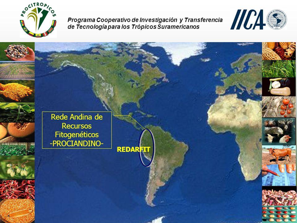 Rede Andina de Recursos Fitogenéticos -PROCIANDINO-