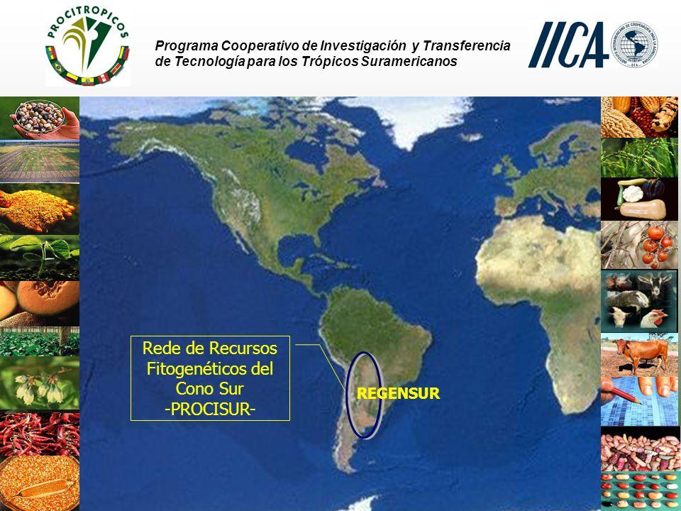 Rede de Recursos Fitogenéticos del Cono Sur -PROCISUR-