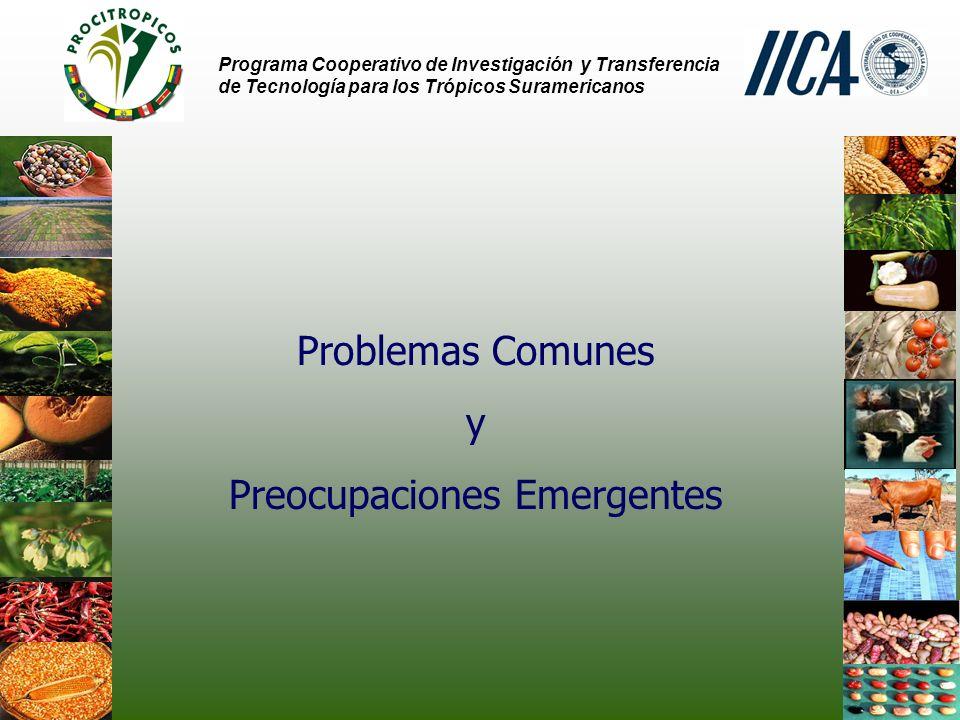 Preocupaciones Emergentes