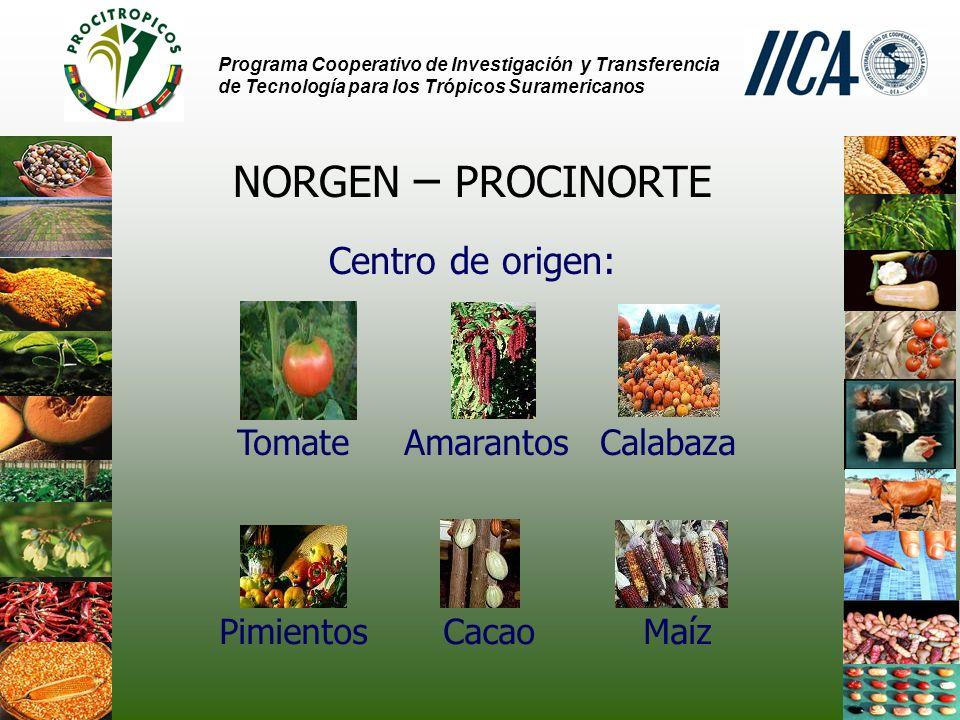 NORGEN – PROCINORTE Centro de origen: Tomate Amarantos Calabaza