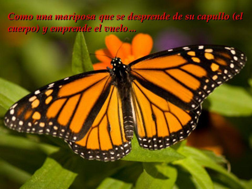 Como una mariposa que se desprende de su capullo (el cuerpo) y emprende el vuelo…