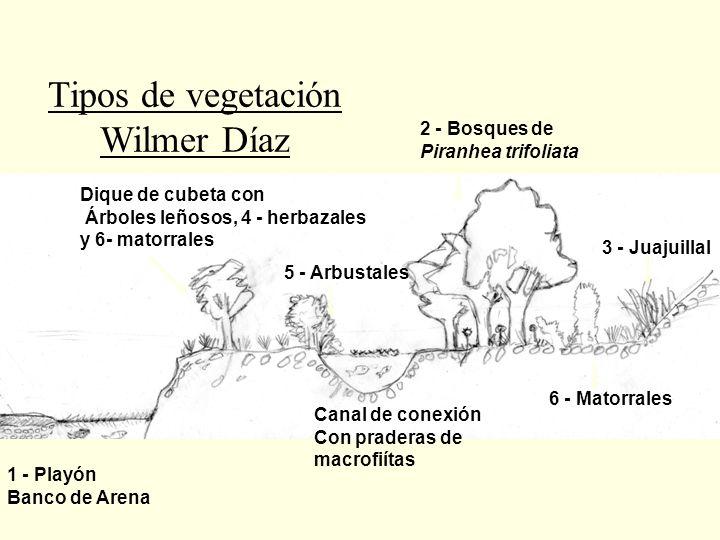 Tipos de vegetación Wilmer Díaz 2 - Bosques de Piranhea trifoliata