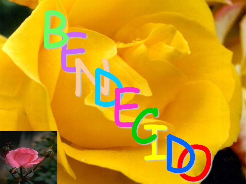 I E B N D C O