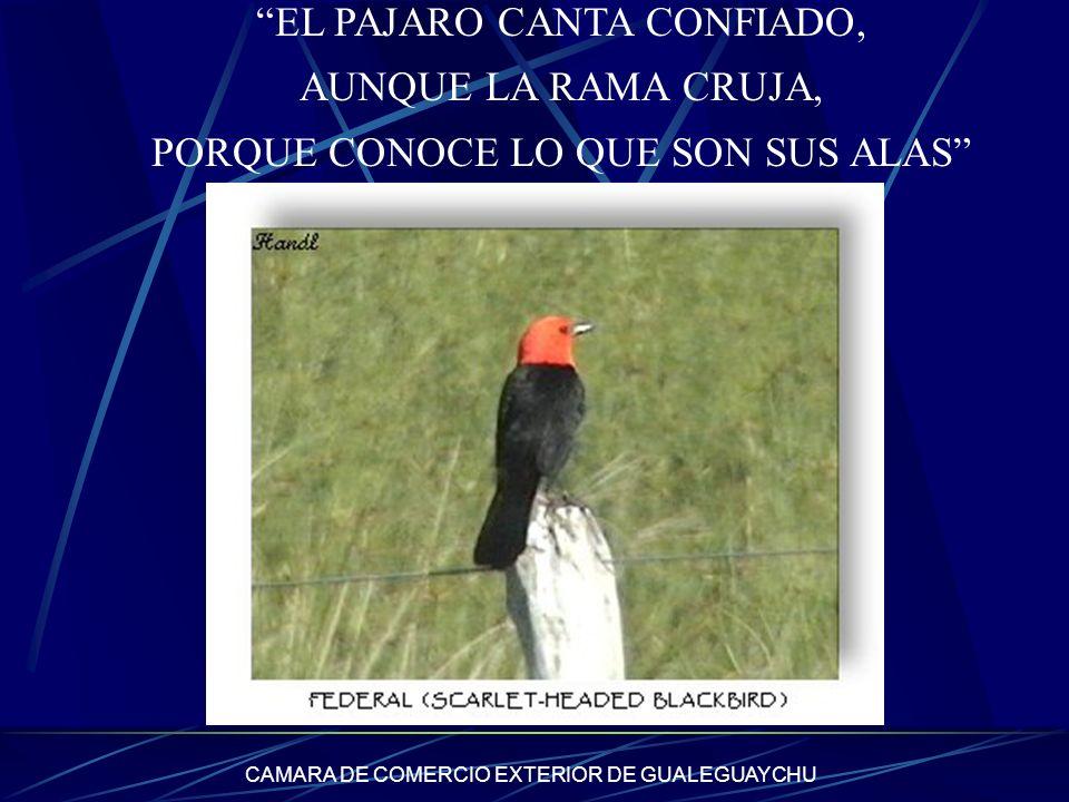 EL PAJARO CANTA CONFIADO, AUNQUE LA RAMA CRUJA,