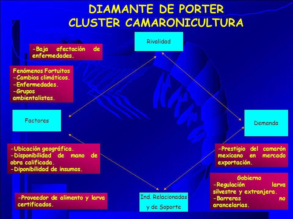DIAMANTE DE PORTER CLUSTER CAMARONICULTURA
