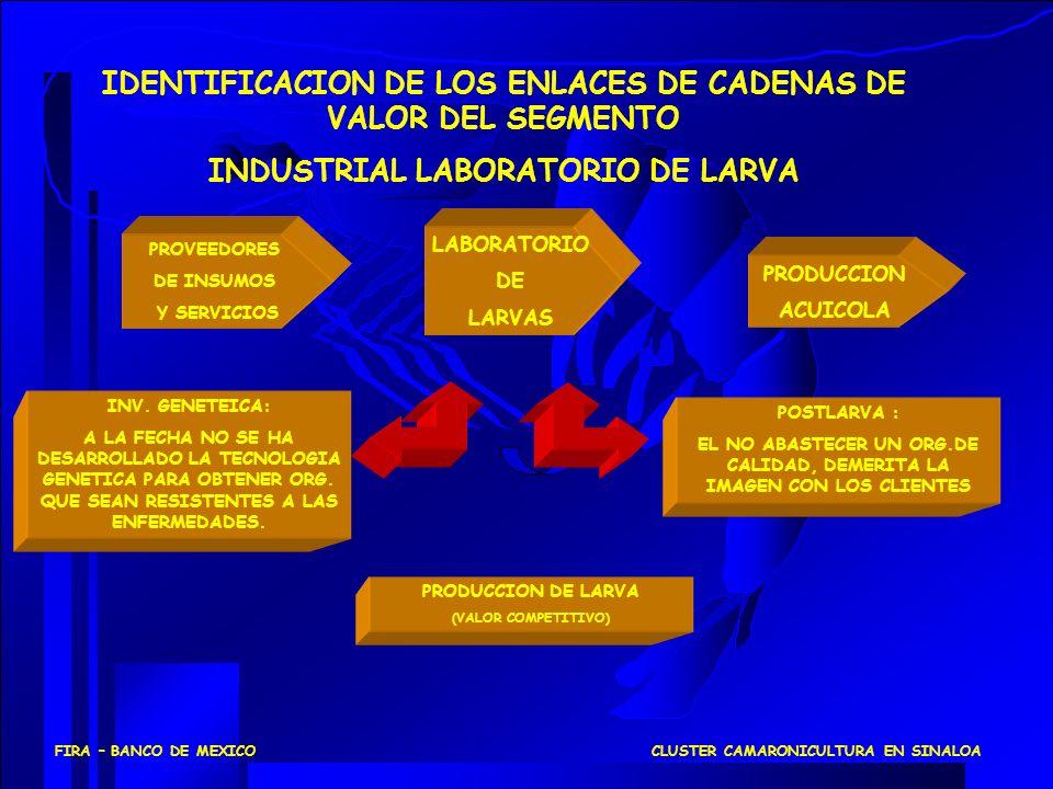 IDENTIFICACION DE LOS ENLACES DE CADENAS DE VALOR DEL SEGMENTO