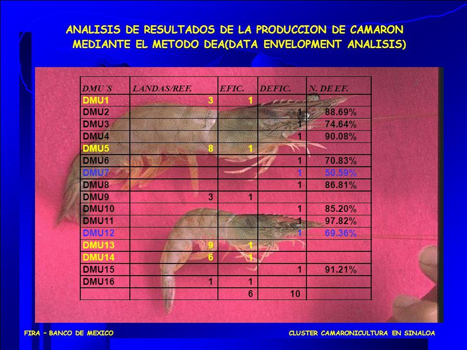 ANALISIS DE RESULTADOS DE LA PRODUCCION DE CAMARON