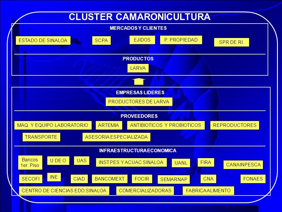 CLUSTER CAMARONICULTURA