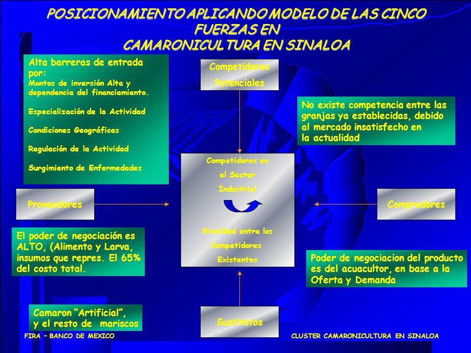 POSICIONAMIENTO APLICANDO MODELO DE LAS CINCO FUERZAS EN CAMARONICULTURA EN SINALOA