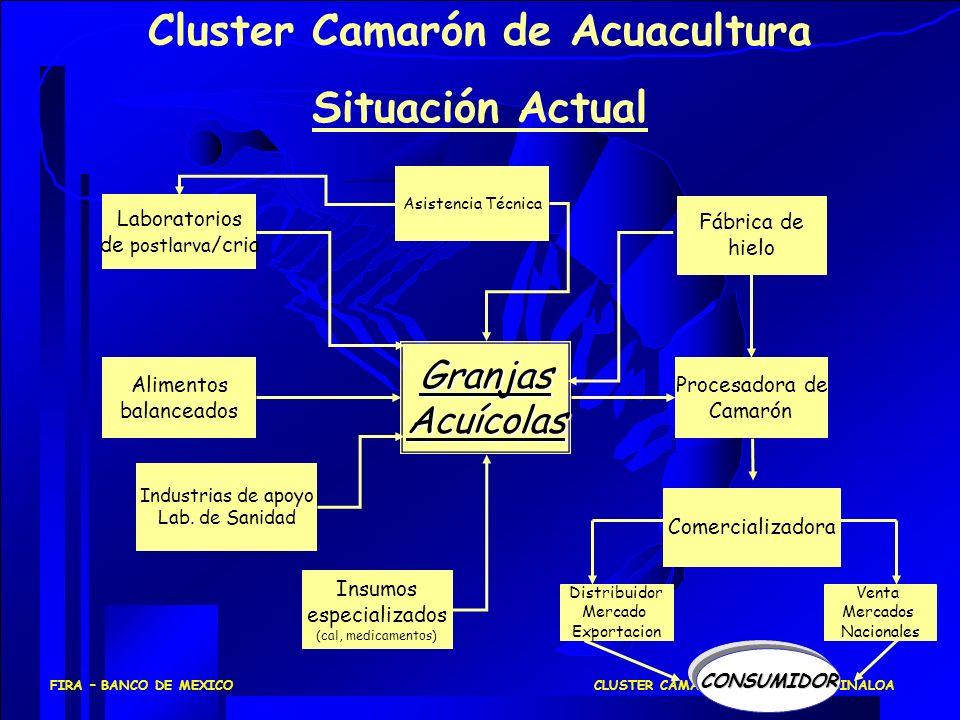 Cluster Camarón de Acuacultura