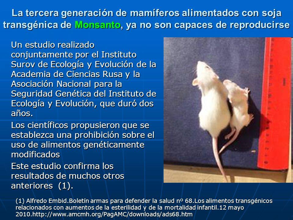 La tercera generación de mamíferos alimentados con soja transgénica de Monsanto, ya no son capaces de reproducirse