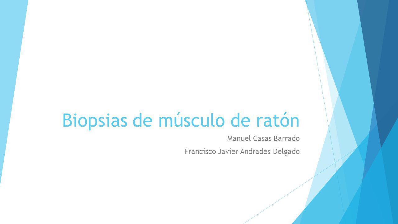 Biopsias de músculo de ratón