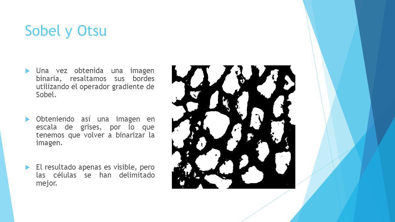 Sobel y Otsu Una vez obtenida una imagen binaria, resaltamos sus bordes utilizando el operador gradiente de Sobel.