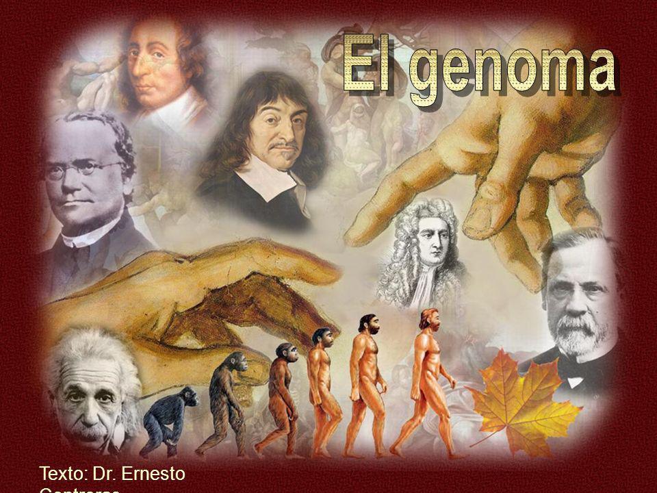 El genoma Texto: Dr. Ernesto Contreras
