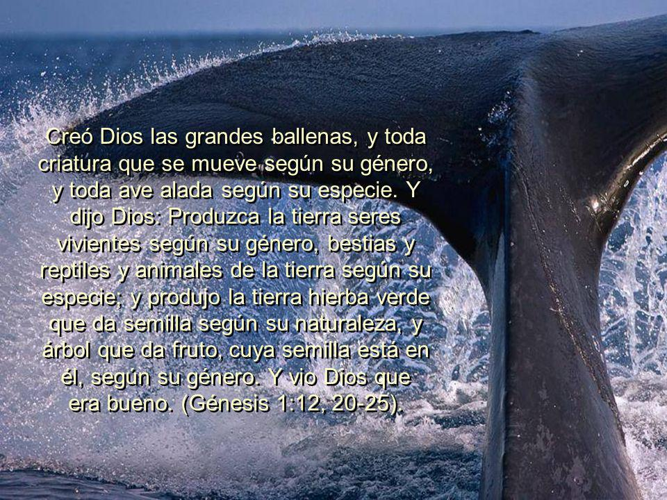 Creó Dios las grandes ballenas, y toda criatura que se mueve según su género, y toda ave alada según su especie.