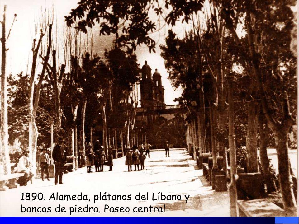 1890. Alameda, plátanos del Líbano y