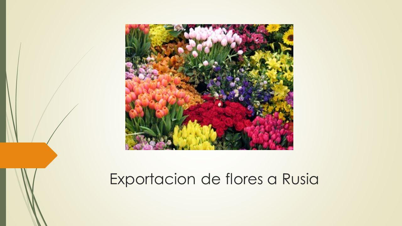 Exportacion de flores a Rusia