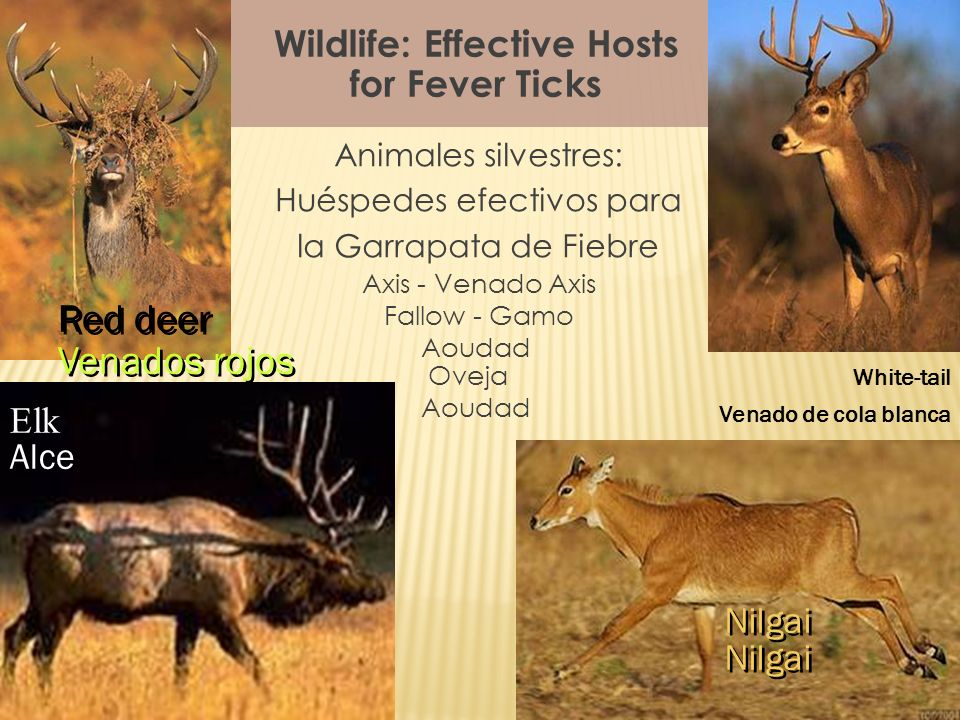 Wildlife: Effective Hosts