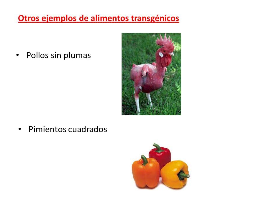 Otros ejemplos de alimentos transgénicos