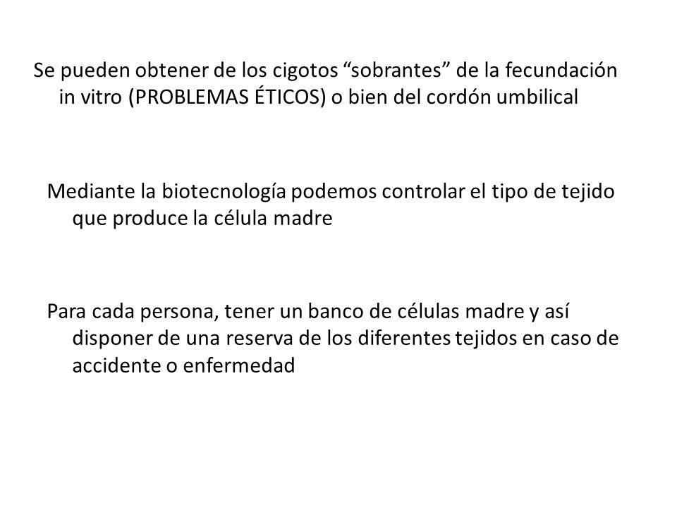 Se pueden obtener de los cigotos sobrantes de la fecundación in vitro (PROBLEMAS ÉTICOS) o bien del cordón umbilical