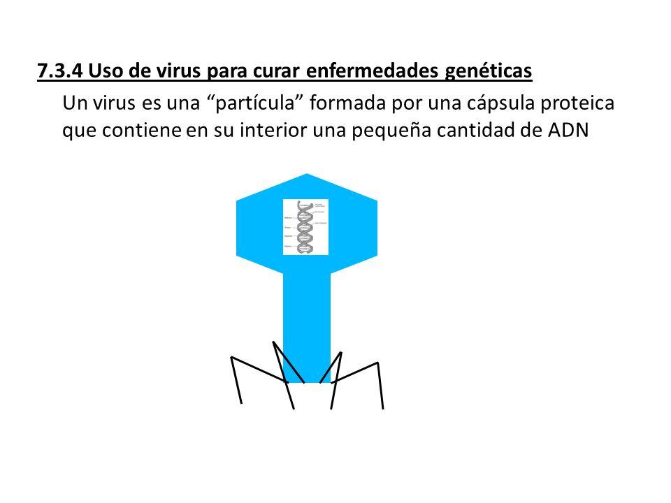 7.3.4 Uso de virus para curar enfermedades genéticas