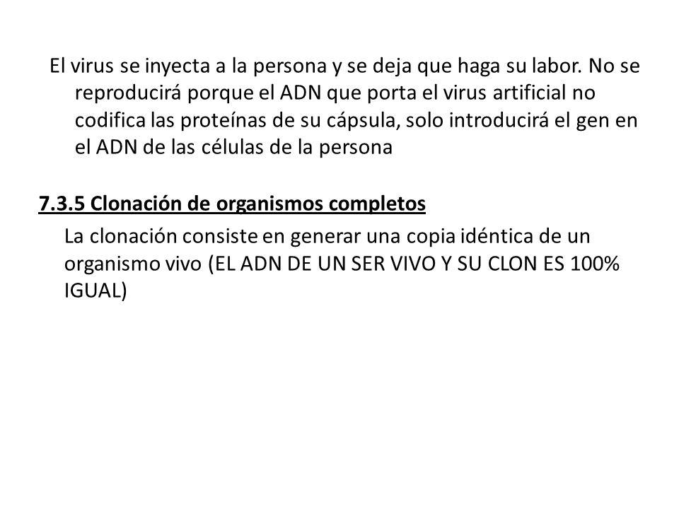 El virus se inyecta a la persona y se deja que haga su labor