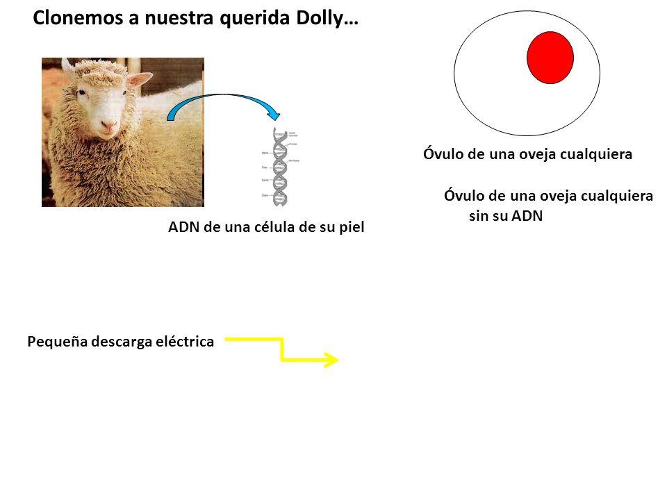 Clonemos a nuestra querida Dolly…