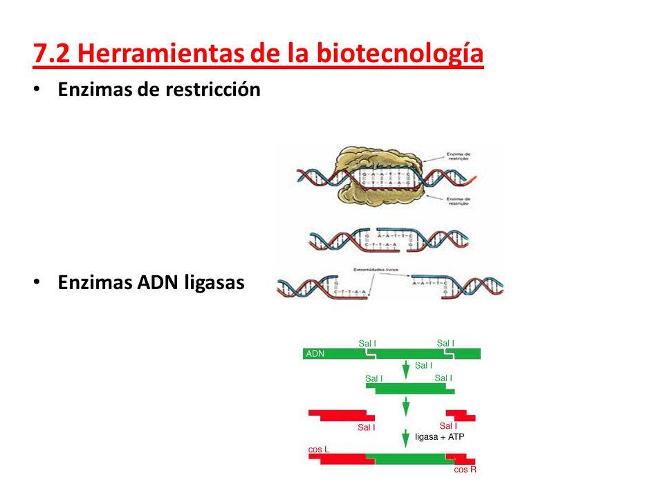 7.2 Herramientas de la biotecnología