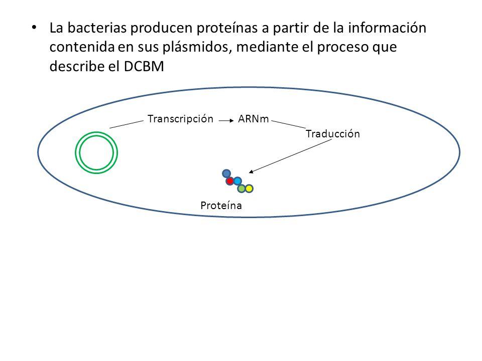 La bacterias producen proteínas a partir de la información contenida en sus plásmidos, mediante el proceso que describe el DCBM