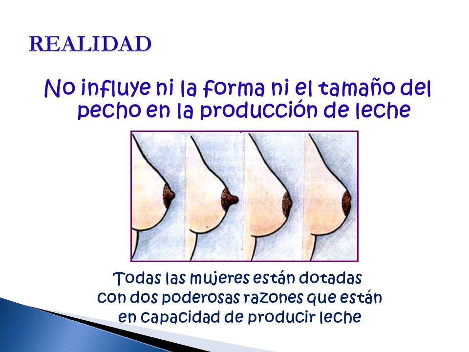 REALIDAD No influye ni la forma ni el tamaño del pecho en la producción de leche. Todas las mujeres están dotadas.
