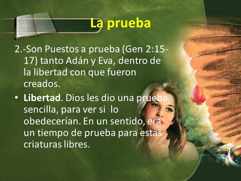 La prueba 2.-Son Puestos a prueba (Gen 2:15-17) tanto Adán y Eva, dentro de la libertad con que fueron creados.