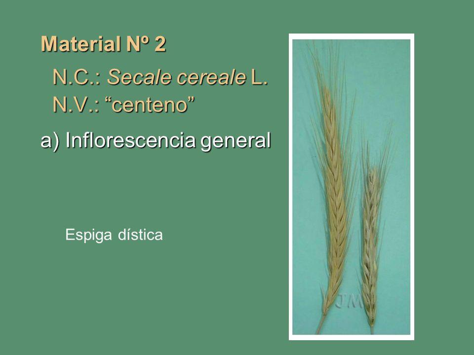 a) Inflorescencia general
