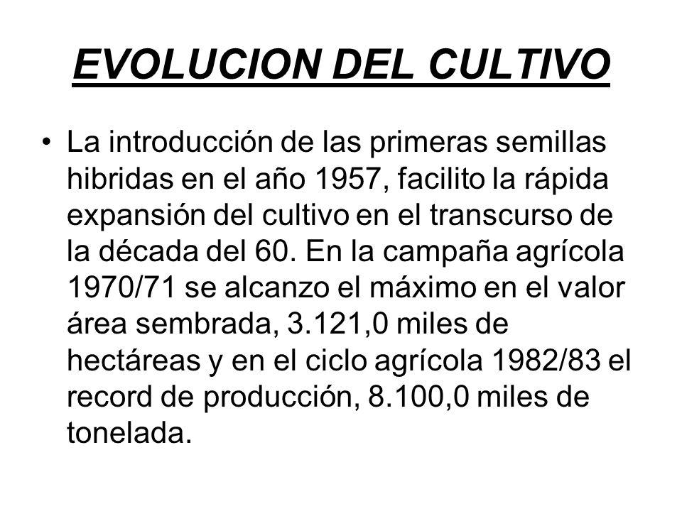 EVOLUCION DEL CULTIVO