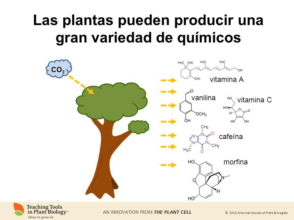 Las plantas pueden producir una gran variedad de químicos