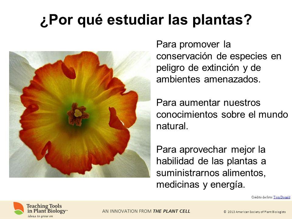 ¿Por qué estudiar las plantas