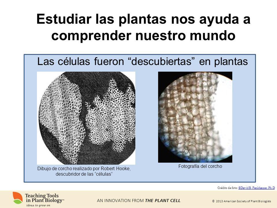 Estudiar las plantas nos ayuda a comprender nuestro mundo