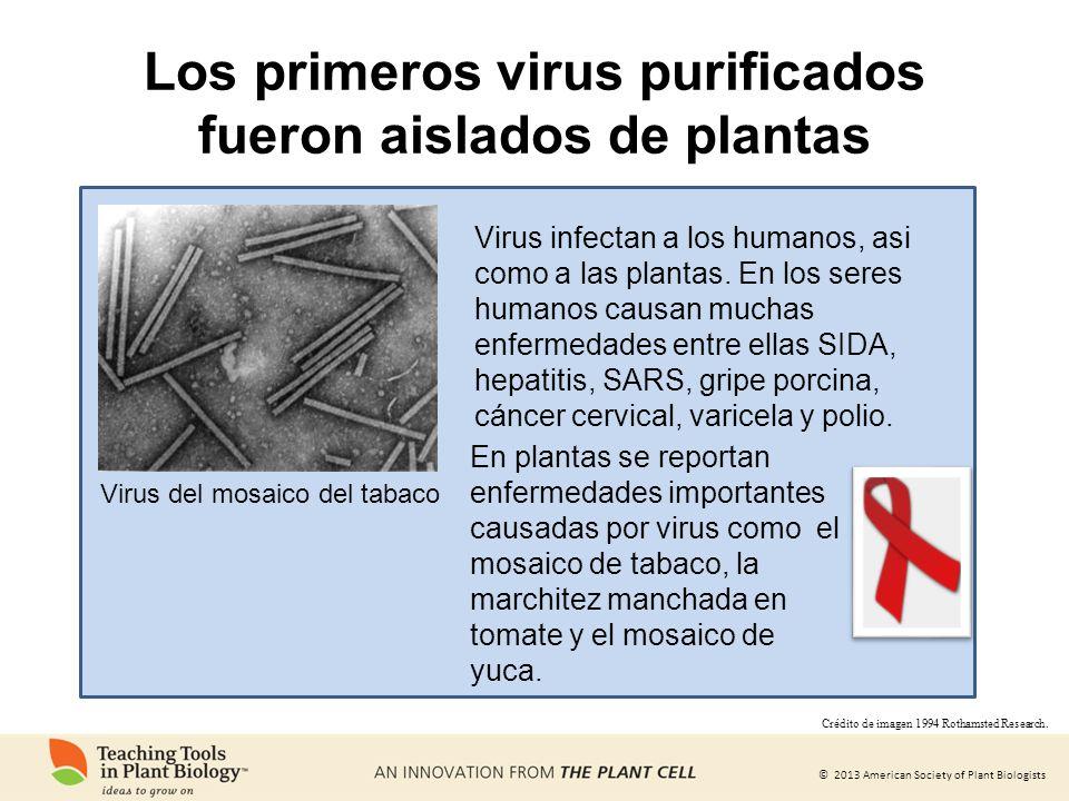 Los primeros virus purificados fueron aislados de plantas