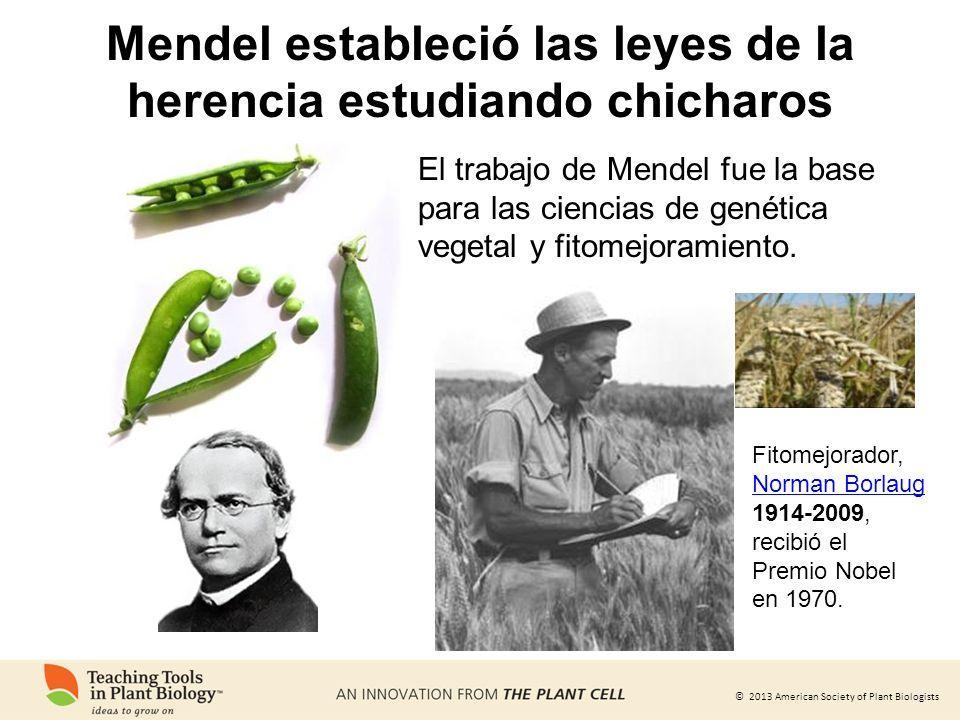 Mendel estableció las leyes de la herencia estudiando chicharos