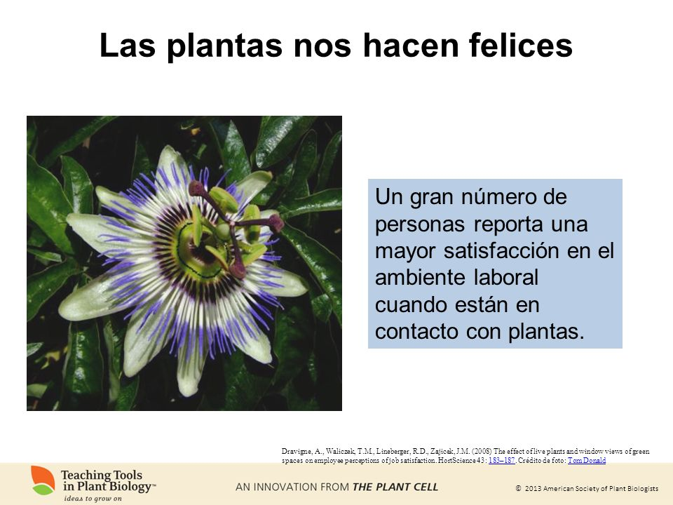 Las plantas nos hacen felices