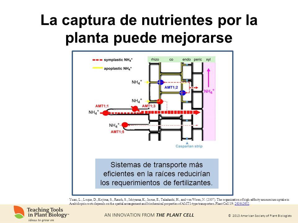 La captura de nutrientes por la planta puede mejorarse