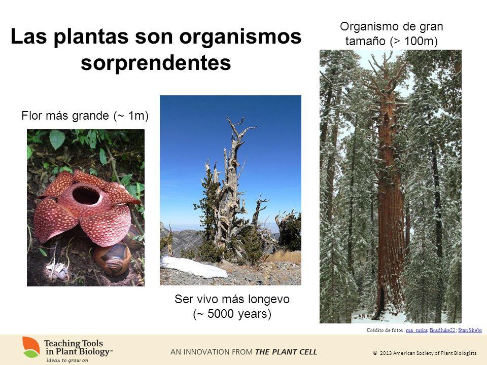 Las plantas son organismos sorprendentes