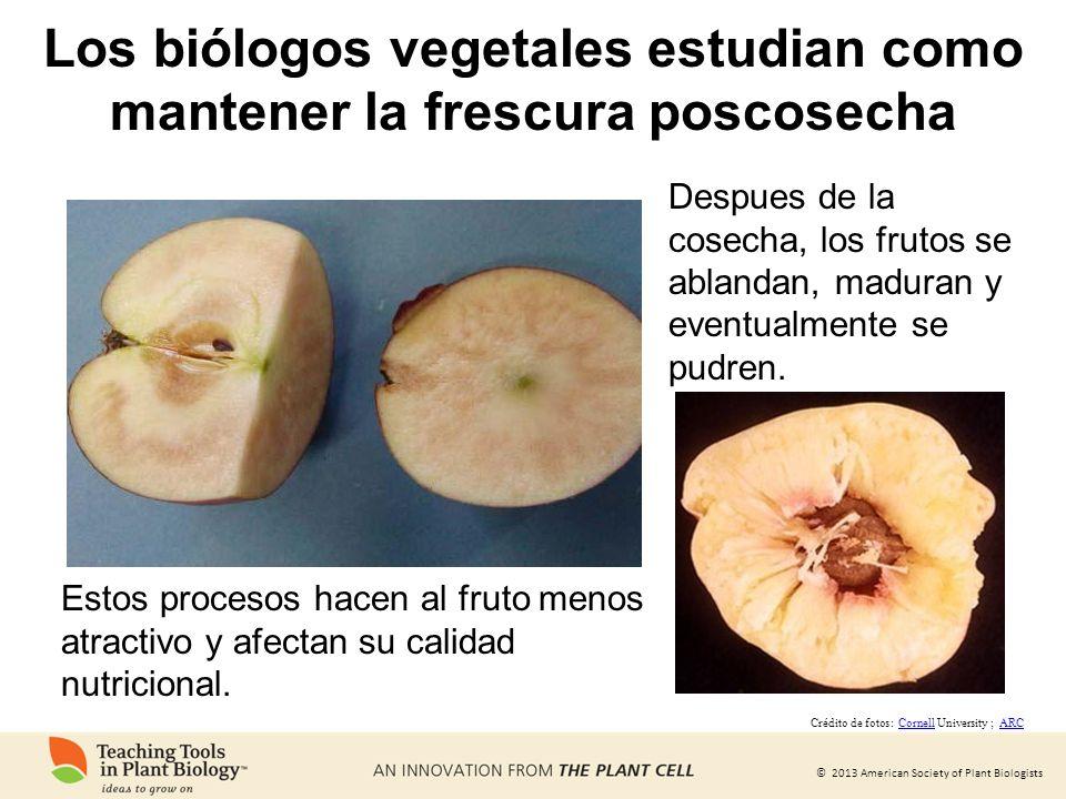 Los biólogos vegetales estudian como mantener la frescura poscosecha