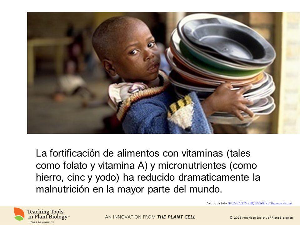 La fortificación de alimentos con vitaminas (tales como folato y vitamina A) y micronutrientes (como hierro, cinc y yodo) ha reducido dramaticamente la malnutrición en la mayor parte del mundo.
