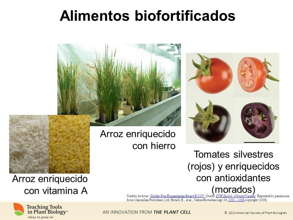 Alimentos biofortificados