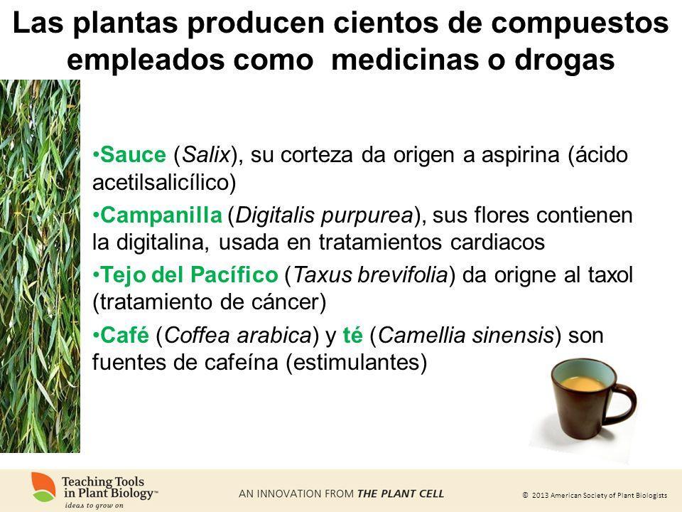 Las plantas producen cientos de compuestos empleados como medicinas o drogas