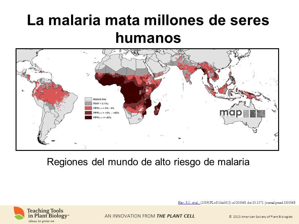 La malaria mata millones de seres humanos