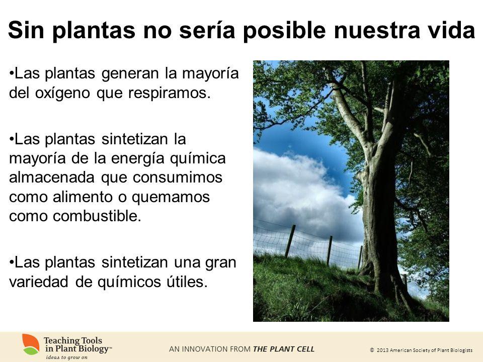 Sin plantas no sería posible nuestra vida