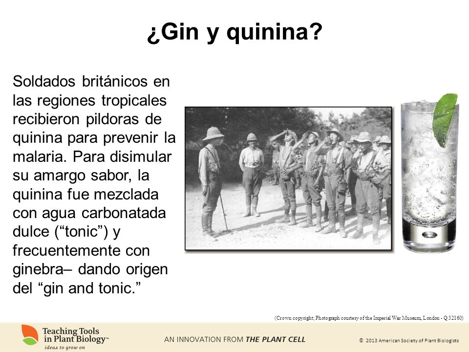 ¿Gin y quinina